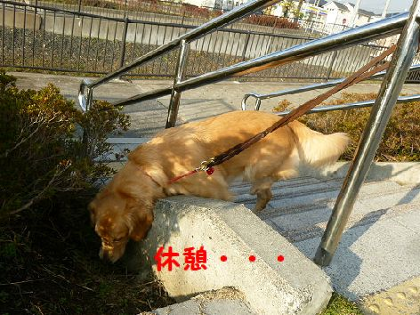 b_20111208071921.jpg