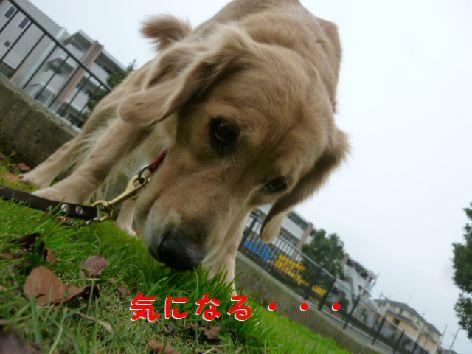 b_20111209072252.jpg