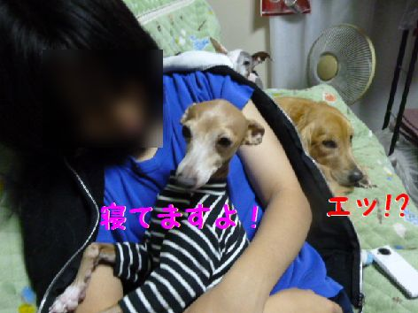 b_20111217071056.jpg