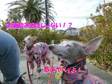 b_20111229074806.jpg