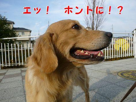 b_20120103105127.jpg