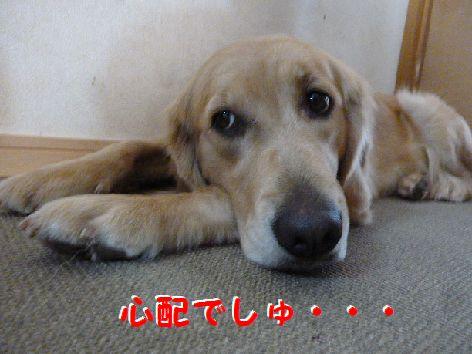 b_20120111070522.jpg