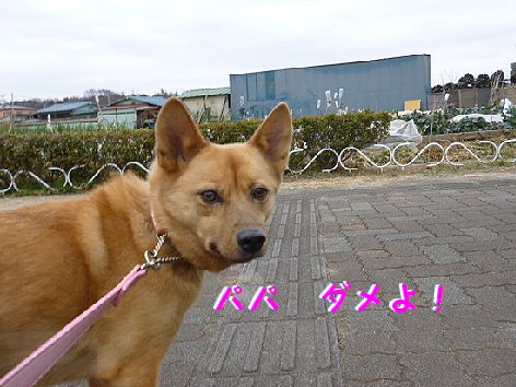 b_20120117073057.jpg
