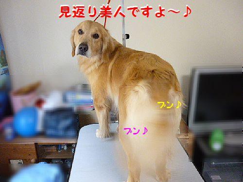 b_20120204202655.jpg