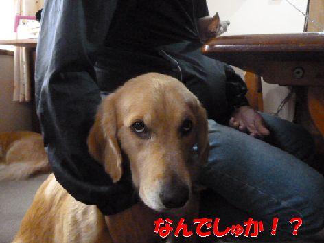 c_20111103100729.jpg