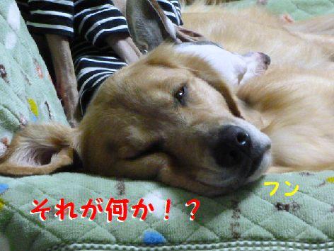 c_20111202070017.jpg