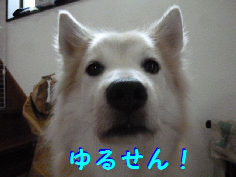 c_20111204101226.jpg