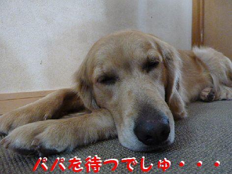c_20120111070522.jpg