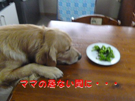 c_20120113071506.jpg