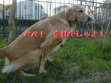 d1_20111230090604.jpg