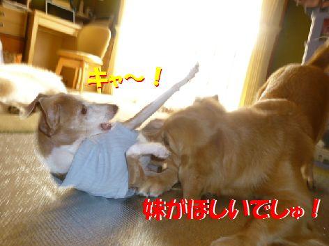 d_20111101072106.jpg