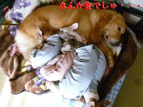 d_20111123084423.jpg