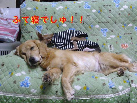 d_20111202070016.jpg