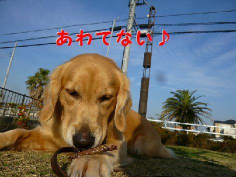 d_20111208071915.jpg
