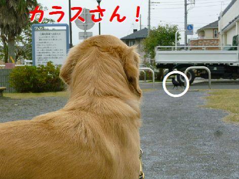 d_20111209072252.jpg