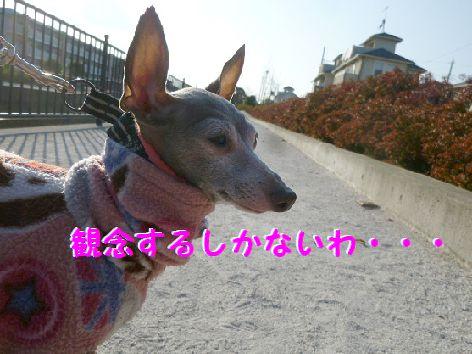 d_20111230090605.jpg