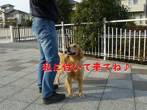d_20120102093256.jpg