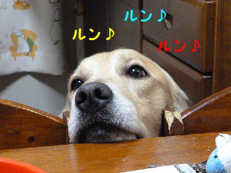 d_20120111070521.jpg