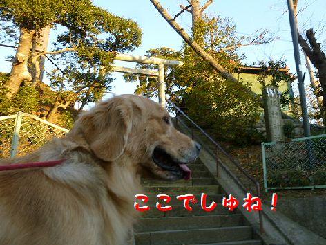 d_20120114080614.jpg