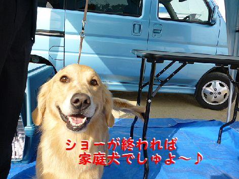 d_20120118062947.jpg