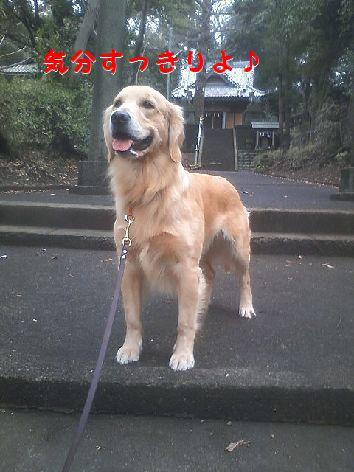 d_20120123065444.jpg