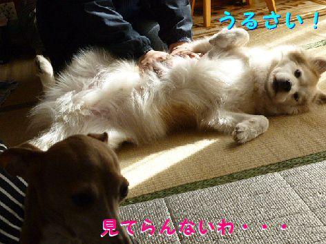 d_20120131071434.jpg