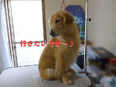 d_20120204202654.jpg