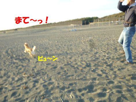 e_20111102070635.jpg
