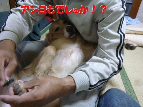 e_20111118070412.jpg