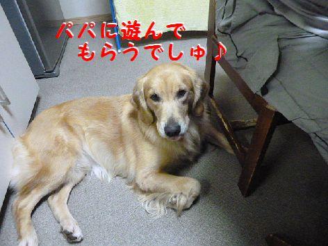 e_20111202070011.jpg
