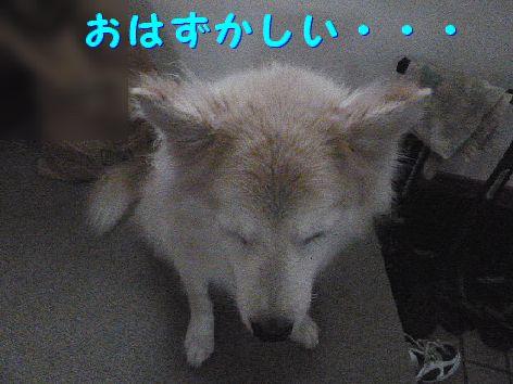e_20111204101225.jpg