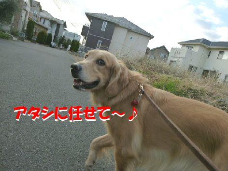 e_20111229074806.jpg