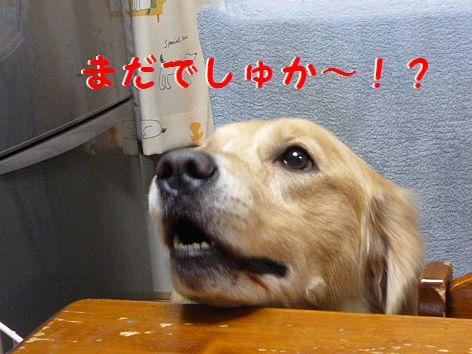 e_20120111070521.jpg
