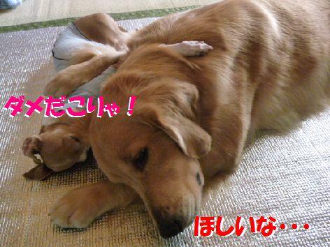 f_20111101072105.jpg