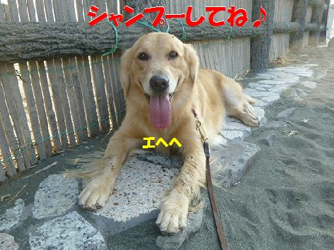 f_20111110071721.jpg