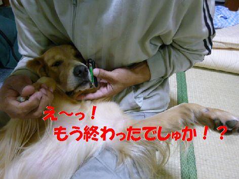 f_20111118070412.jpg