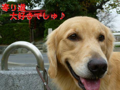 f_20111201072015.jpg