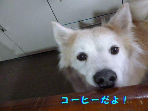 f_20111203103527.jpg