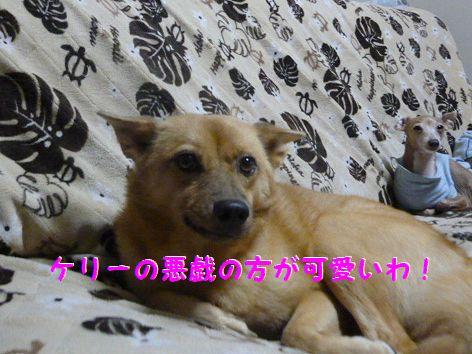 f_20111204101225.jpg
