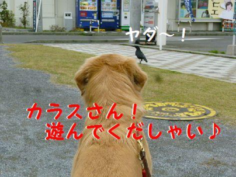 f_20111209072251.jpg
