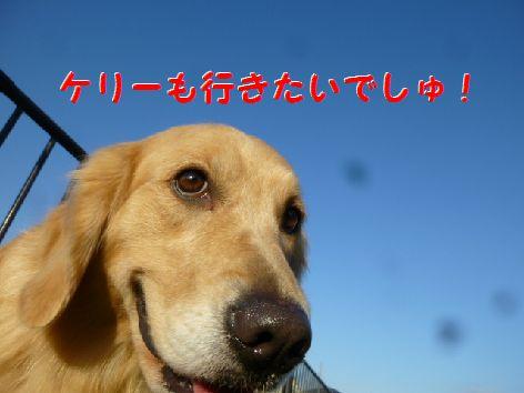 f_20111214073234.jpg