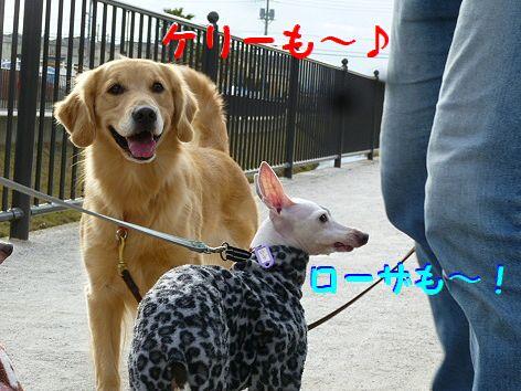 f_20120109084542.jpg