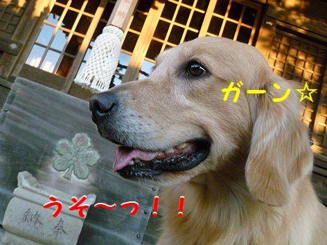 f_20120114080613.jpg