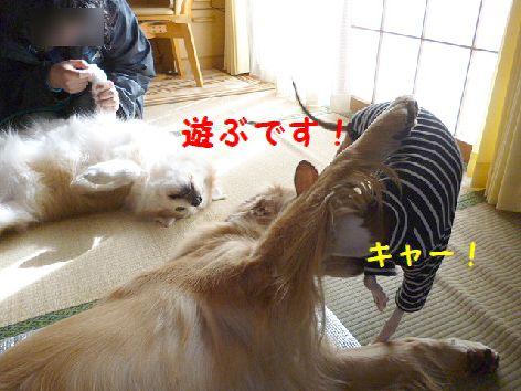 f_20120131071434.jpg
