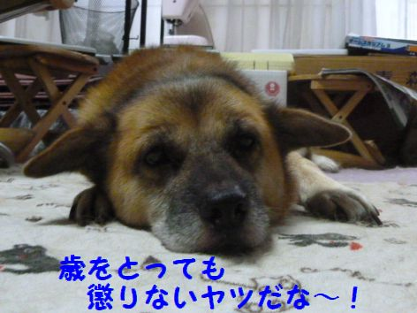 g_20111204101237.jpg