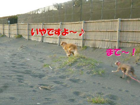h_20111102070703.jpg