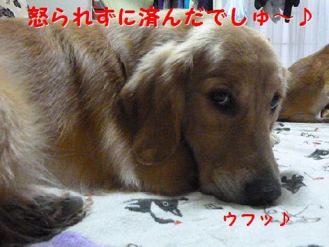 h_20111204101237.jpg