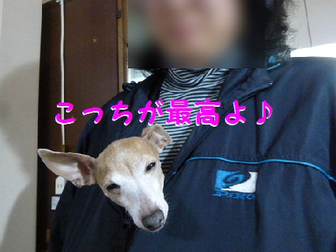 h_20111209072309.jpg