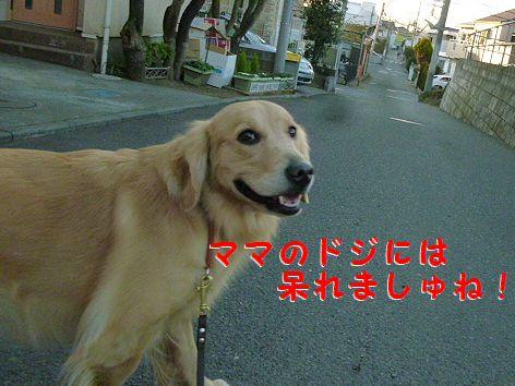 h_20120114080635.jpg