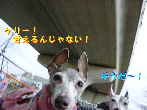 h_20120124080226.jpg